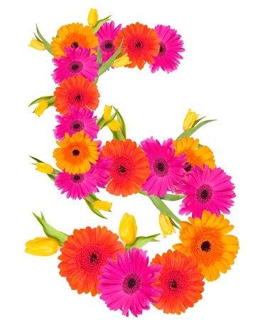 5, flower alphabet isolated on white  photo
