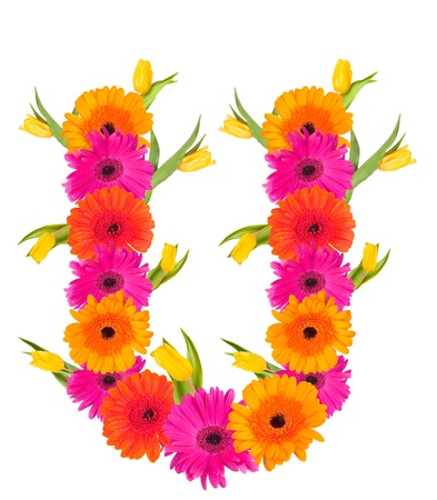 U flower alphabet isolated on white  photo