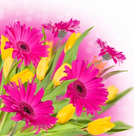 Spring flowers  tulips and gerbera  photo