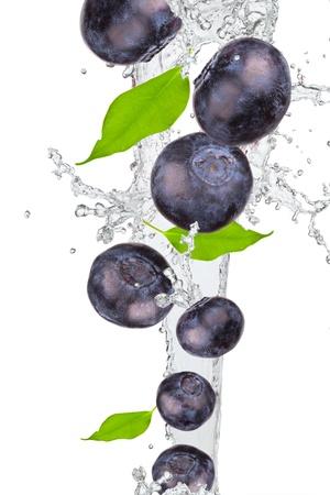 Blauwe bessen en blad met splash op wit wordt geïsoleerd