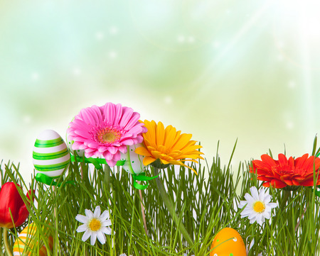 gerberas flowers with the grass, spring and easter concept photo