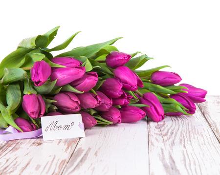 pastel flowers: Nature tulip