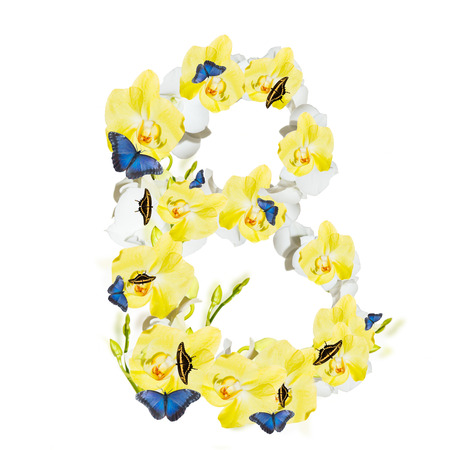 Letter B orchid and butterfly, spring isolated on white background