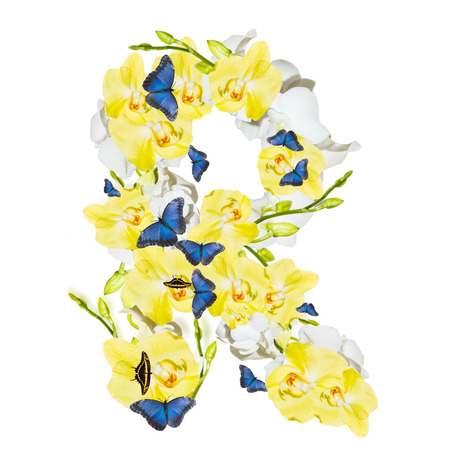 harmonous: Letter, orchid isolated on white background Stock Photo