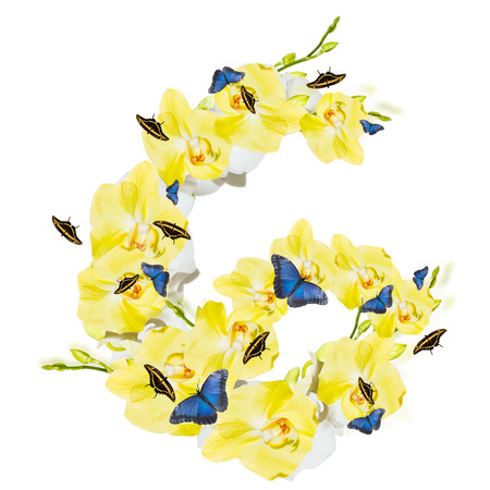 Letter G orchid and butterfly, spring isolated on white background Stock Photo