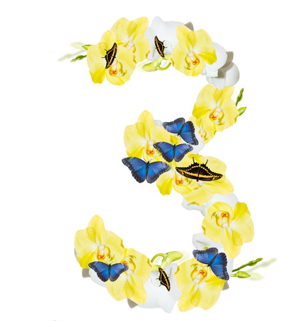 harmonous: Number 3 orchid and butterfly, spring isolated on white