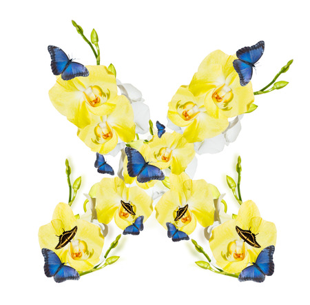 Letter X orchid and butterfly, spring isolated on white background