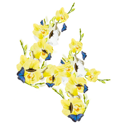 harmonous: Number 4 orchid and butterfly, spring isolated on white