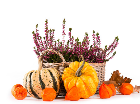 Pumpkin and flower isolated on white background, autumn concept