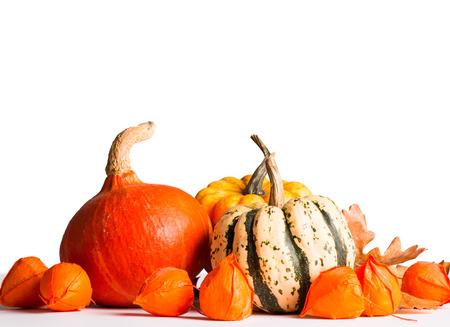 mini farm: Pumpkin and flower isolated on white background, autumn concept Stock Photo