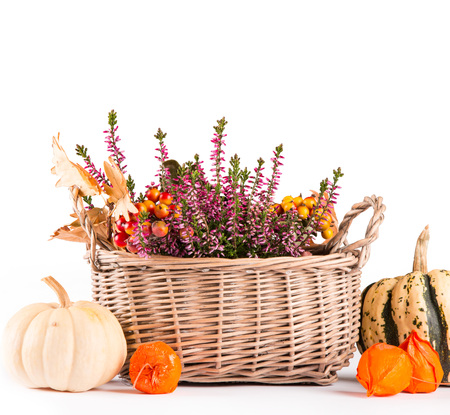 Pumpkin and flower isolated on white background, autumn concept Reklamní fotografie