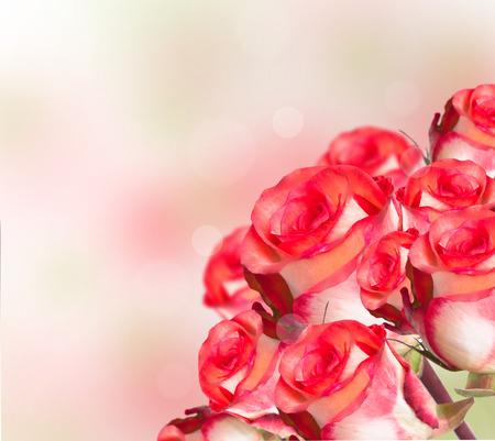 rose flower Reklamní fotografie