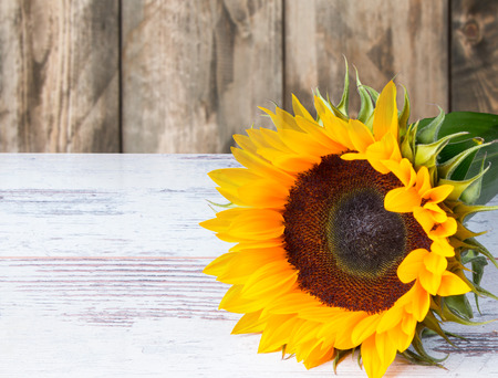 Sunflower oil with flower and seeds on wooden table with nature background Stock Photo