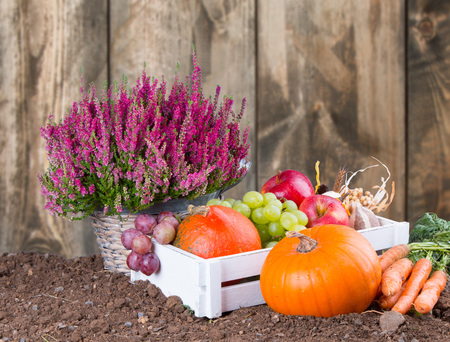 pear tree: Autumn nature concept. Fall fruit and vegetables on wooden table