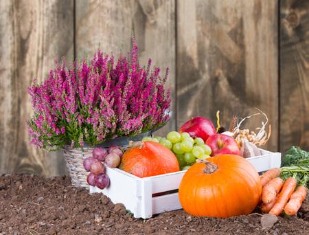arbol de manzanas: Concepto de naturaleza de oto�o. Oto�o de frutas y verduras en la mesa de madera