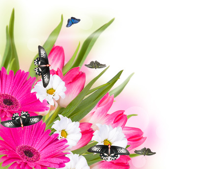 gerber daisy: Gerber daisy, butterfly and tulip isolated on white background
