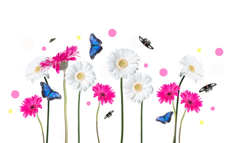 gerber daisy: Gerber Daisy, and butterfly isolated on white background Stock Photo