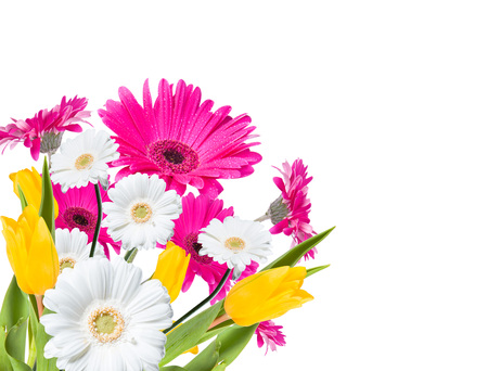 gerber daisy: Gerber Daisy, tulips and butterfly isolated on white background