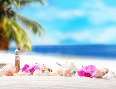 Shells on sandy beach with tropical beach background