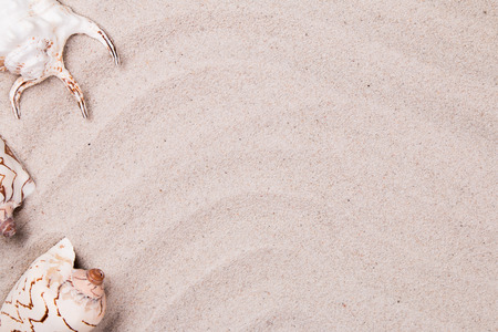ladys: Sand and shell background