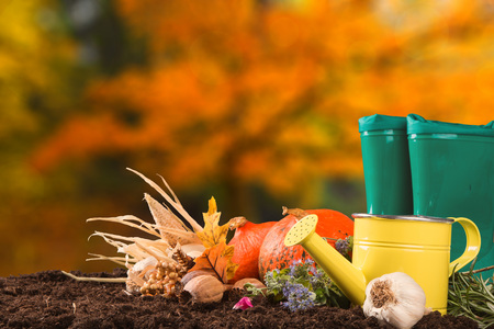 Garden tools with flower, pumpkin on wooden table. Autumn concept