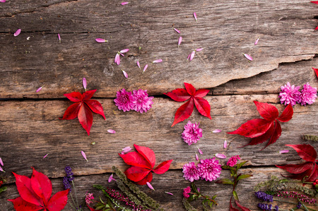 Colored leaves on wooden table. Autumn concept. Mix flowers on board. Stock Photo