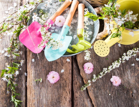 Garden tolls and spring seedling isolated on wooden