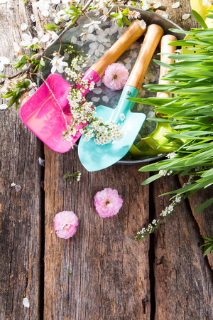 Garden tolls and spring seedling on wooden Stock Photo