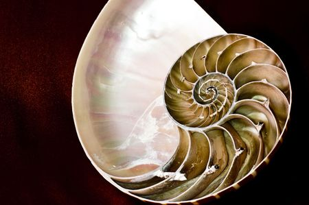logarithmic: Photographic representation of the inner section of a Nautilus shell. In it is the natural realization of the concept of mathematical logarithmic spiral.