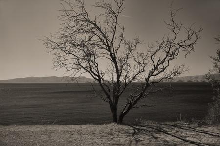 monocrome: Backlit tree monocrome