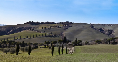 val d      orcia: Tuscany  Italy  Val d Orcia La Foce road of cypress