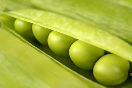 Background of fresh green peas in the pod  photo