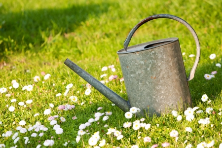 Old tin watering can in a green meadow with white blossoms photo