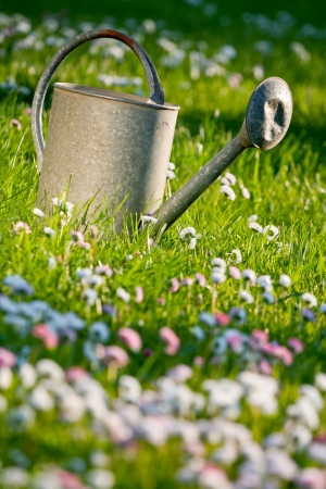Old tin watering can in a green meadow with little flowers photo
