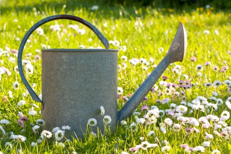 Vintage tin watering can in a green meadow with little flowers