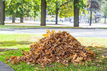 Heap of dry oak leaves in autum time photo