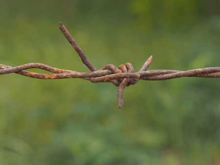 bulwark: barb barbed bulwark fence garden grating old rust stockaden wire