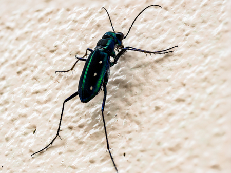 Tiger, beetle, insects,  chrysalis ,weevil ,worm ,caterpillar, animal, garden