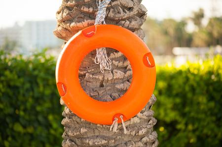 teh: Life-buoy on teh palm tree Stock Photo