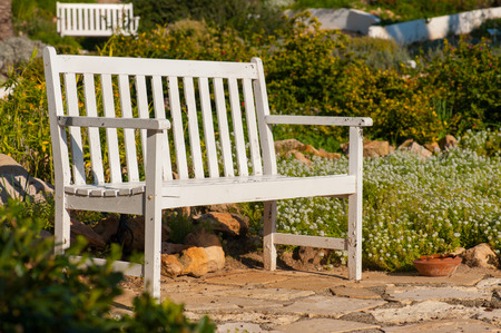 aromatic: Wooden bench in blossoming aromatic garden