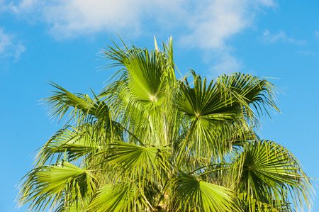 the view from below: Palm Leaves, view from below