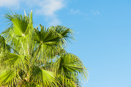 overhanging: Palm Leaves, view from below