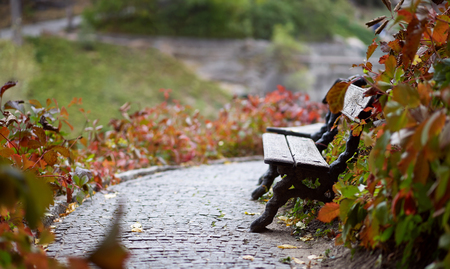 An ancient bench, a stone pavement, a resting place in the park, autumn foliage, garden furniture on the path. Stock Photo