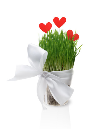 Pot with green lush grass, tied with satin ribbon with bow, decorated with red paper hearts. Isolated on a white background. photo