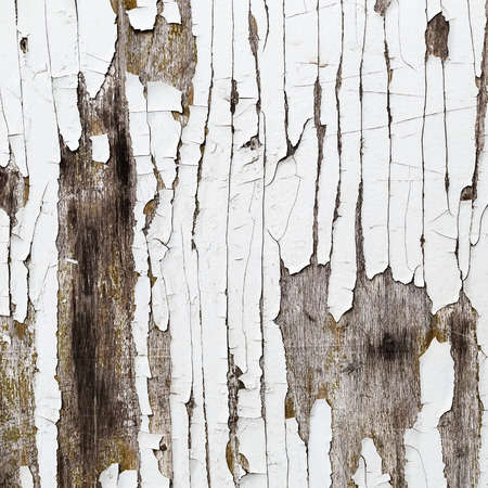 Old weathered wood texture with cracked white paint. photo
