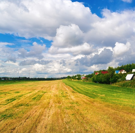cut grass: Field of cut grass and bright blue sky with cumulus clouds. Rural landscape. Bright sunny day. Stock Photo