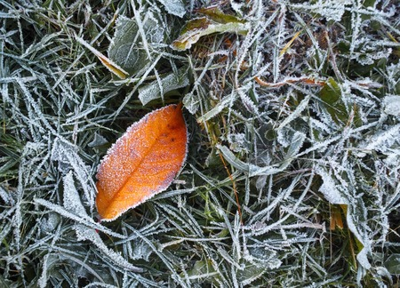 fallen leaf: Hoarfrost crystals on a fallen leaf and grass. Selective focus. Stock Photo