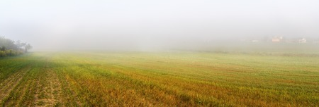 fog foggy: Field and fog. Foggy meadow at morning. Rural landscape with bright green grass. Panoramic shot.