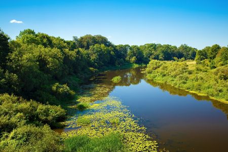 Calm river with thickets of trees and shrubs along the banks. Sunny summer day. Surface of the water with the reflection of blue sky.