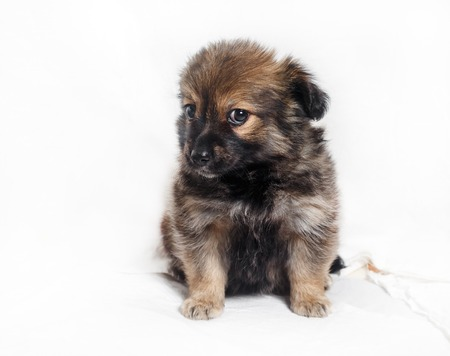 Adorable little puppy dog on light background.